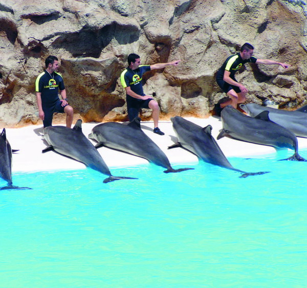 One of the biggest dolphinariums in Europe